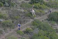 Image from 2016 Cape Pioneer Trek by Zoon Cronje from www.zcmc.co.za #GondwanaGlory