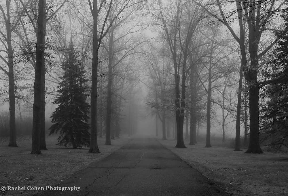 &quot;To Where it Leads&quot; 2 B&amp;W<br /> <br /> Where does this lead? No one knows! Thick fog engulfs everything along this tree lined road!!<br /> <br /> All about Fog by Rachel Cohen