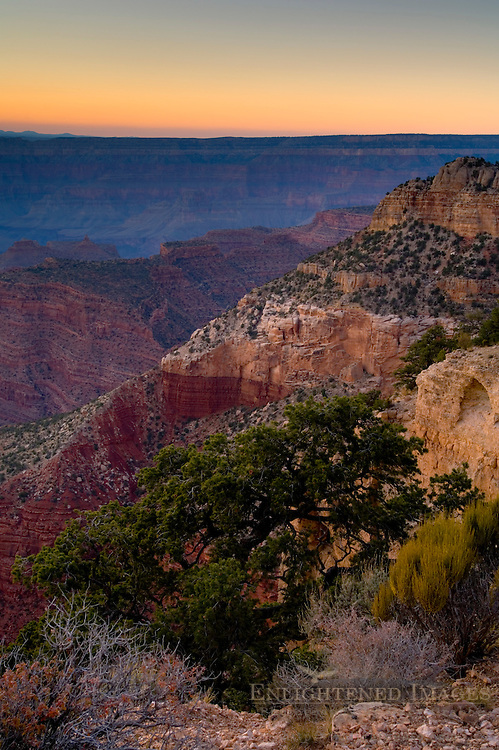 Sunset light on pine tree along the North Rim at Point Sublime, Grand Canyon National Park, Arizona