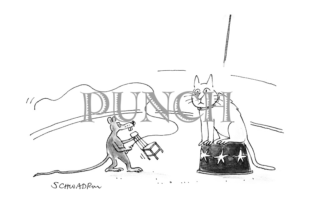 (Circus lion tamer - a mouse taming a cat.)
