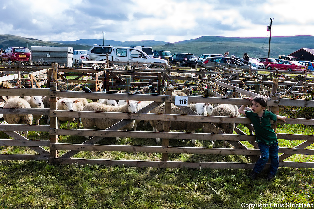 Pennymuir, Hownam, Scotland, UK, 6th September 2014. Farmers from Northumberland and the Scottish Borders gather for the annual Upper Kalewater Show at Pennymuir, situated just inside the Scottish Border on Dere Street in the Cheviot Hills.
