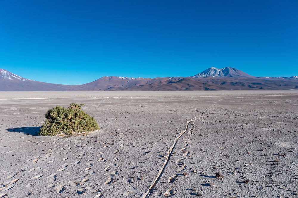 Tracks from cyclist who has pushed his bike through the volcanic ash close to the Volcano Ollage in Chile, Atacama desert, close to the Bolivian border