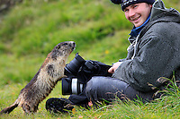 Photographer with Alpine Marmot (Marmota marmota) (model release 02/08/HTNP), Hohe Tauern National Park, Carinthia, Austria