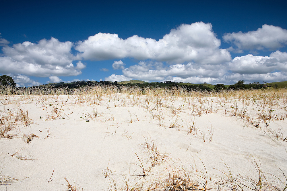 dunes and grasses with a backdrop of green hills at pakiri beach, northland, new zealand