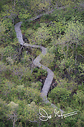 A path snakes through the forest along the coast of San Cristobal island, part of the Galapagos islands of Ecuador.
