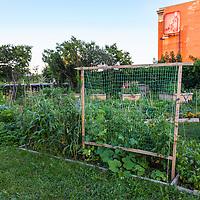 Gardener working in an urban community vegetable garden.
