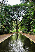 Three Pools reflect a tree in Allerton Garden, on the south shore of Kauai, Hawaii, USA. Address: 4425 Lawai Rd, Koloa, HI 96756. Nestled in a valley transected by the Lawai Stream ending in Lawai Bay, Allerton Garden is one of five gardens of the non-profit National Tropical Botanical Garden (ntbg.org).