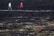 Walkers on scorched heathland. Upton Heath, Dorset, UK.