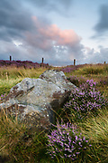 Pink evening skies echo the blossoming heather on Millstone Edge in the Peak District. Summer colours in Derbyshire, England. August, 2014.
