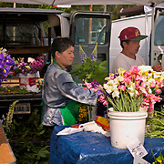 University District outdoor farmers market, Hmong flower farmer arranging flowers at booth, Seattle, Washington<br />