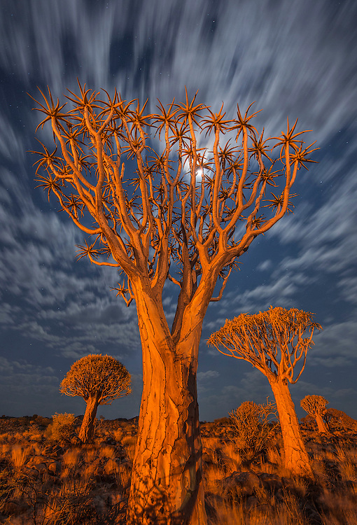 Moonlit clouds trace across the night sky, Quiver Tree Forest, Namibia.