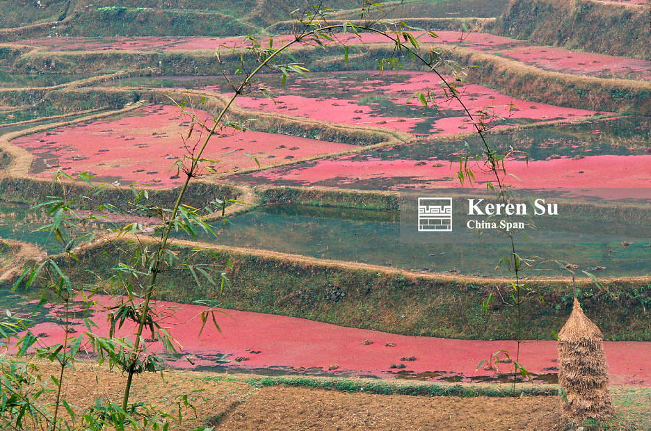 Pink fertilizers in the terraced farmland, Guangxi Province, China
