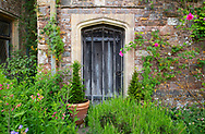 Alstroemeria and Rosa in front of an old wooden door at Cothay Manor, Greenham, Wellington, Somerset, UK
