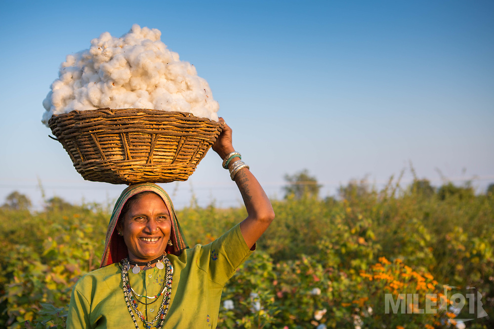 Sheela carrying a basket of organic cotton on their farm in  Sendhwa, India.<br /> <br /> Sheela and Manga have recently converted to organic cotton farming with help from the Aga Khan Foundation who are working in partnership with the C&amp;A Foundation.