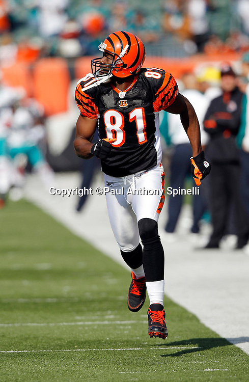 Cincinnati Bengals wide receiver Terrell Owens (81) goes out for a pregame pass during the NFL week 8 football game against the Miami Dolphins on Sunday, October 31, 2010 in Cincinnati, Ohio. The Dolphins won the game 22-14. (©Paul Anthony Spinelli)