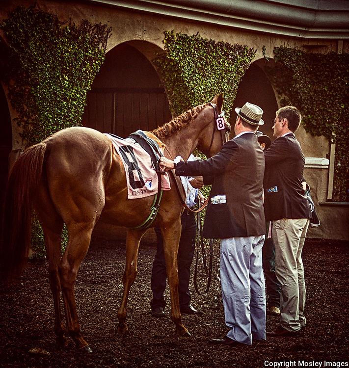 Top Thoroughbred Trainer Doug O'Neil assist saddling horse before race in Del Mar Paddock area.
