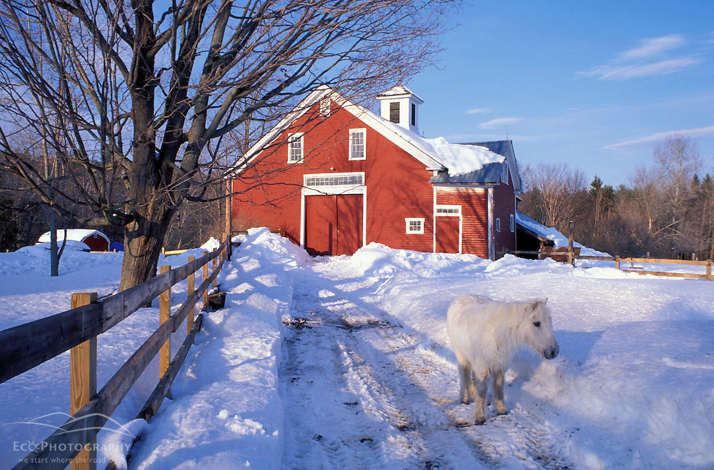 A pony and a barn near the Lamprey River in winter.  Lee, NH
