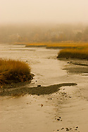 Forest river conservation area, Salem, Massachusetts.