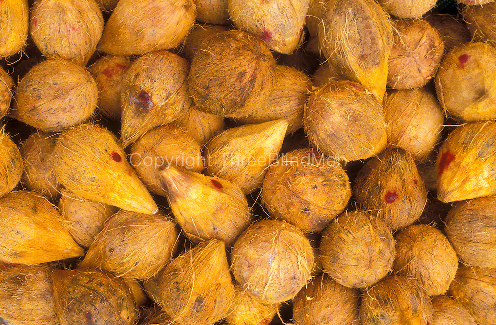 Coconuts bathed in turmeric.