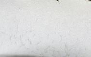 Summer Bolete - Boletus reticulatus