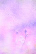 pink and purple vertical painted field with two discernible stalk flowers lower left, abstract, flower art, feminine, high resolution, licensing, iridescent, 3744 x 5616