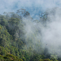 Mist enveloping the rainforest, Gunung Silam, Sabah, Malaysia, Borneo, South East Asia.