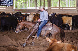 May 20, 2017 - Minshall Farm Cutting 3, held at Minshall Farms, Hillsburgh Ontario. The event was put on by the Ontario Cutting Horse Association. Riding in the 1,000 Amateur Class is James Cook on Dual Peps Tom Cat owned by the rider.