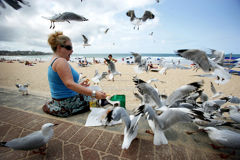 8th February 2007. Sydney, NSW. Siobhan O'Gorman is overwhelmed by seagulls on Manly beach, as she tries to eat her lunch. In a hope to solve the problem there are plans to introduce birds of prey to the busy area. PHOTO © JOHN CHAPPLE / REBEL IMAGES. .tel 310 570 9100.john@chapple.biz.www.chapple.biz..