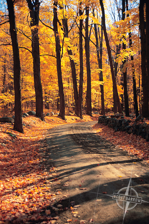 Country road in the autumn.