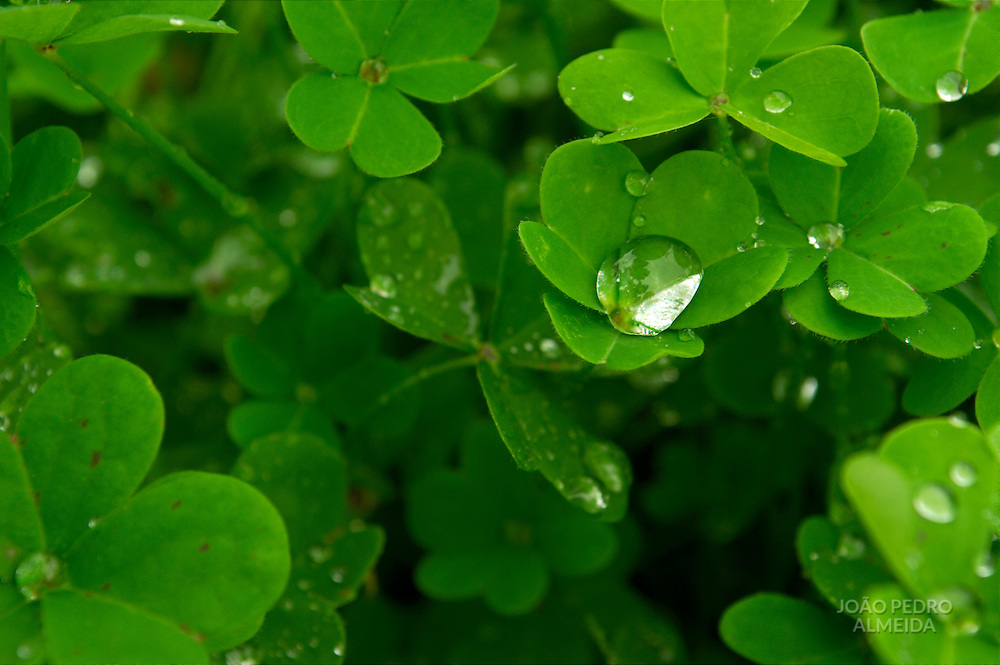 water drop captures in shamrock