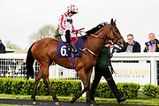 "Brockagh Cailin ridden by Jack Mitchell and trained by J S Moore in the Free Tips From ""Sandstorm"" At Valuerater.Co.Uk Handicap race.  - Mandatory by-line: Ryan Hiscott/JMP - 01/05/2019 - HORSE RACING - Bath Racecourse - Bath, England - Wednesday 1 May 2019 Race Meeting"