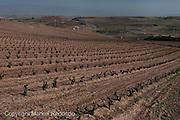 Rioja Vineyards, Spain.