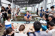 A dive instructor from the ANA InterContinental Manza Beach Resort shows volunteers participating in the Team Tyura Sango coral reef restoration project how to attach pieces of coral attached to a ceramic name tag that will be placed into coral nurturing tanks before being bolted to the sea bed in the nearby bay in Onna Village, Okinawa Prefecture, Japan, on Saturday, June 23, 2012.  Coral seedlings are put on small plates made of coral-like components, then fixed in place by wire and given a registration  number. They are raised at an aquafarm for several months before being bolted to the sea floor.  Photographer: Robert Gilhooly