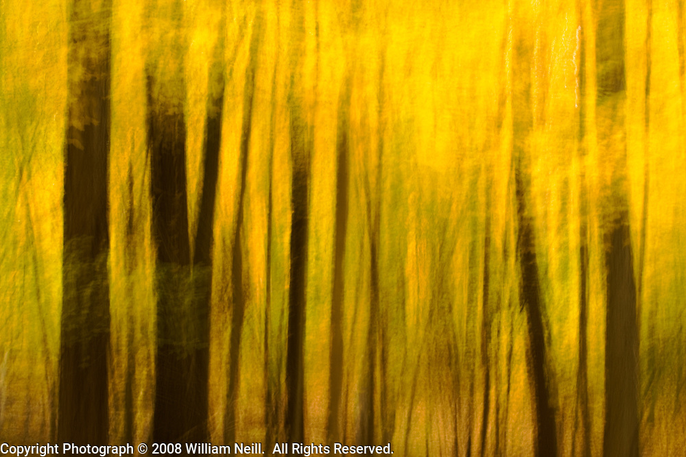 Yellow Forest, Watchtung Reservation, New Jersey