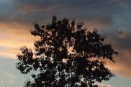 El cielo se define a menudo como el espacio en el que se mueven los astros y por efecto visual parece rodear la Tierra.<br /> <br />  En astronomía, cielo es sinónimo de esfera celeste: una bóveda imaginaria sobre la cual se distribuyen el Sol, las estrellas, los planetas y la Luna. La esfera celeste se divide en regiones denominadas constelaciones.<br /> <br /> El color del cielo es resultado de la radiación difusa, interacción de la luz solar con la atmósfera. En un día de sol el cielo de nuestro planeta se ve generalmente celeste. <br /> <br /> El color varía entre el naranja y rojo durante el amanecer y al atardecer. Cuando llega la noche el color pasa a ser un azul muy oscuro, casi negro.<br /> <br />  Durante el día el sol se puede ver en el cielo, a menos que esté oculto por las nubes. Durante la noche (y en cierto grado durante el día) la Luna, las estrellas y, en ocasiones, algunos planetas vecinos son visibles en el cielo.<br /> <br /> ©Alejandro Balaguer/Fundación Albatros Media.