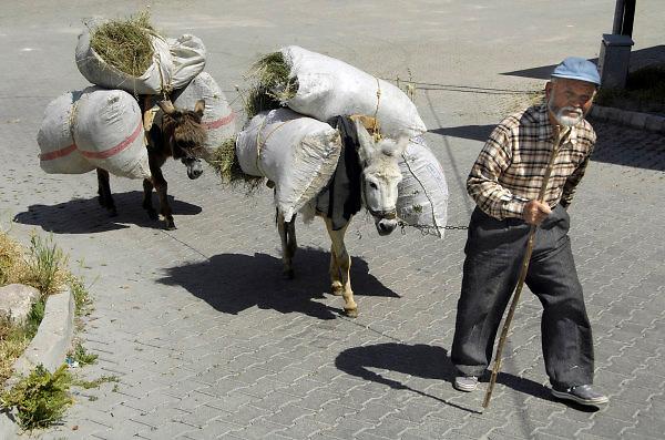 Turkije, Anatolie, 8-6-2011Boer, landbouwer, met ezels die zakken gras als last heben..Foto: Flip Franssen