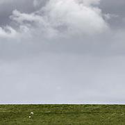 Nederland Coudorpe gemeente Borsele 19 juni 2010 20100619       ..Serie landschappen provincie Zeeland. Zuid Beverland, Polderlandschap, schapen grazen op een dijk aan de westerschelde. , uniek, unieke, veld, vergezicht, vergezichten, verte, vrij, vrijheid weer, weersomstandigheden, wei, weide, weidegang, weiland, weiland. Landscape, wijdheid, wijds, wijdsheid, wit, witte, wolk, wolken, wolkenpartij, zeeland, zeeuws vlaanderen, zeeuws-vlaanderen, zeewering, zo vrij als een vogel, zware, zwitserleven gevoel ..Foto: David Rozing