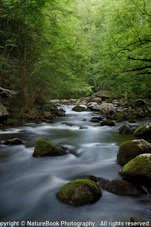 Deep in the Smokies, the quiet stream and lush greenery make you feel like you're a world away from the cares of daily life.