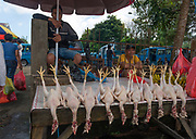 Selling chickens at Selling fruit, spices and vegetables at Tomohon extreme market, north Sulawesi, Indonesia.
