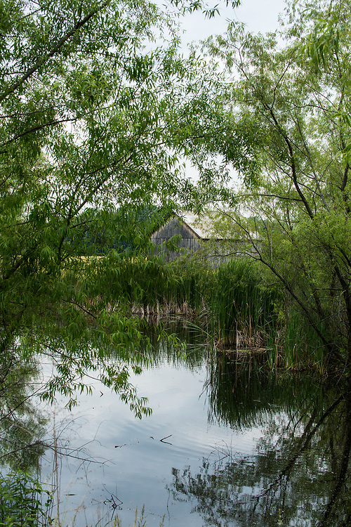 Tree framed pond with barn in the background