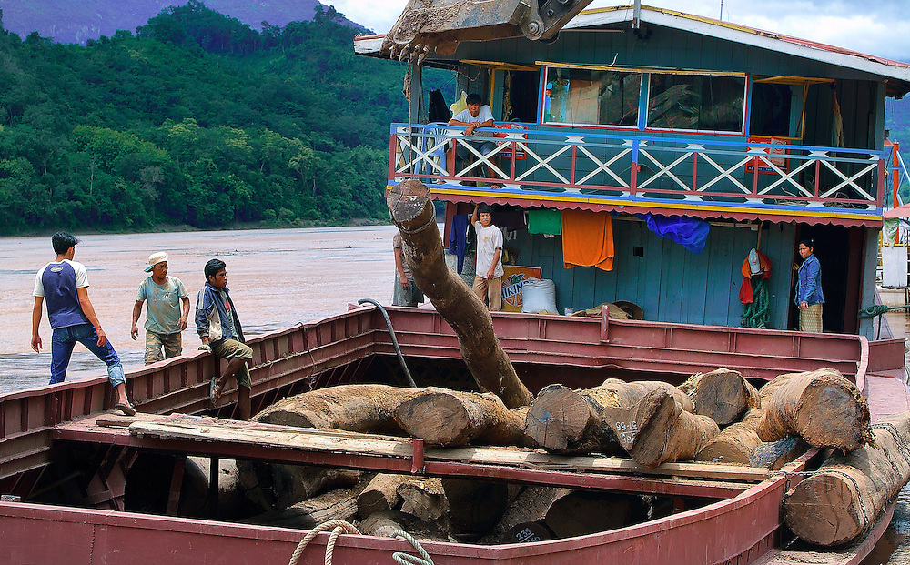 Massive volumes of timber is still being logged and then shipped down the rivers of Laos.