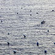 Fish boats in the bay of Naples, Italiec. Pêcheurs dans la baie de Naples, Italie.