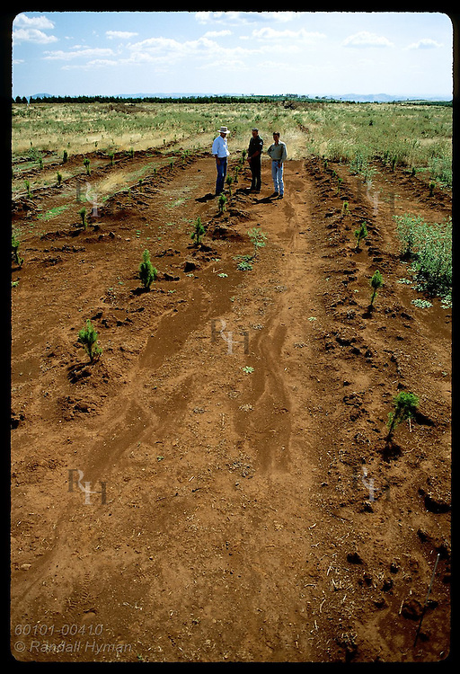 Monsanto rep and foresters visit weed-free pine nursery treated w/ herbicide;Tumut District, NSW Australia