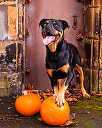Manchester Dogs Home Calendar Photography 2014