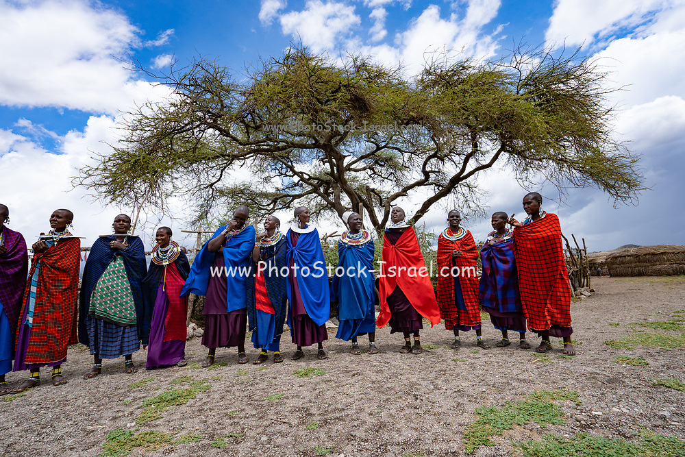 Traditional Masai Jumping Dance at a Masai Village, Tanzania, East Africa