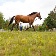 20140811 Low Res Woman Lunging Horse