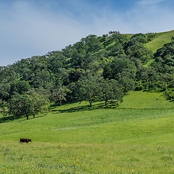 Unusually Green Landscape of California near Gilroy, California
