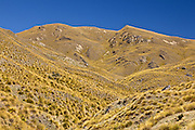 golden tussock hills of Central Otago