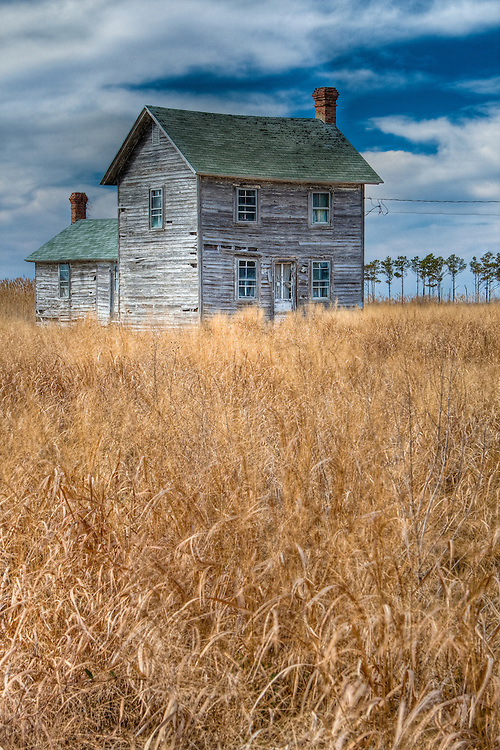 A distressed and deserted house stands on a lot reclaimed by natural grasses, Middle Hooper's Island, Hoopersville, Maryland.