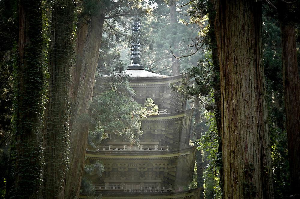 HAGURO, JAPAN Dewasanzan - five roof pagoda in a middle of the cedar tree and under a falling lignt. Auguts 2005 ***[FR]*** La pagode du sanctuaire shinto Dewasanzan au milieu des cedre et sous une lumière matinale.